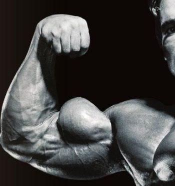 Arnold Schwarzenegger Peak-Biceps