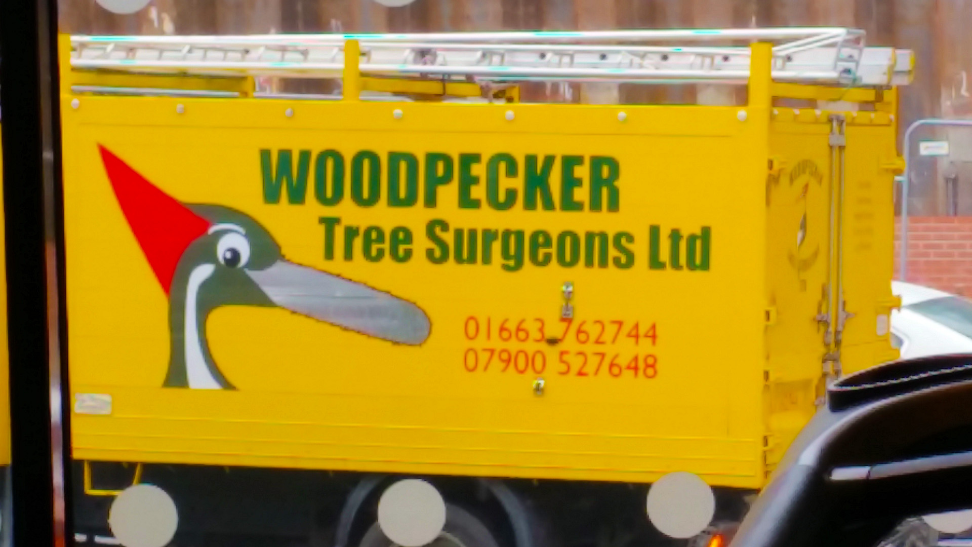 Woodpecker Tree Surgeons